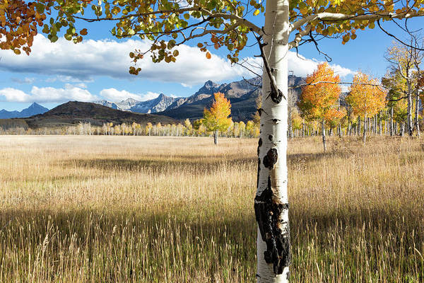 Photograph - Through The Aspen Trees by Denise Bush