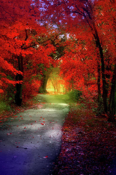 Photograph - Through The Crimson Leaves To A Golden Beginning by Tara Turner