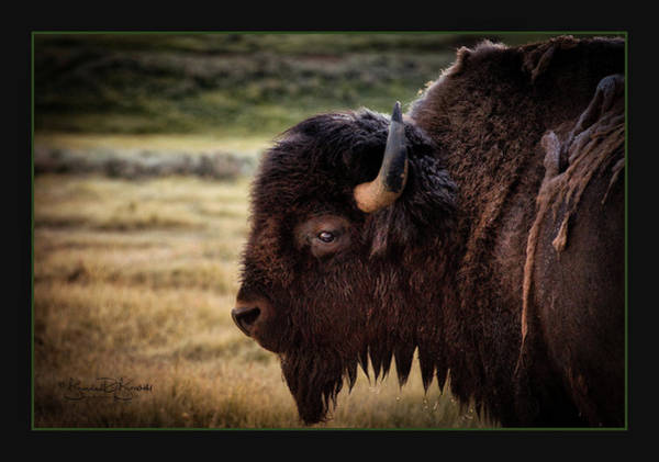 Wall Art - Photograph - Through The Eye Of A Buffalo In The Wild by Brenda D Busskohl