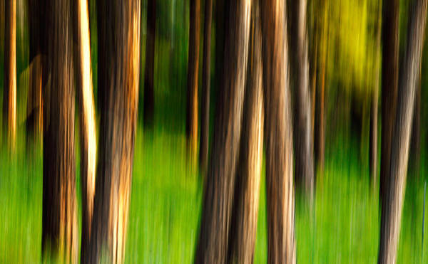 Photograph - Through The Forest by Todd Klassy
