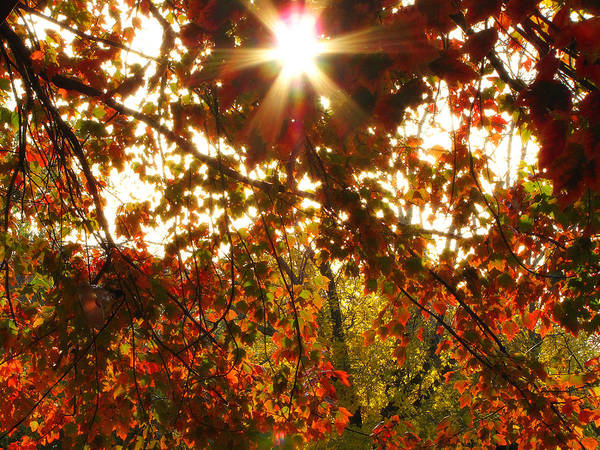 Photograph - Through The Leaves by Scott Hovind