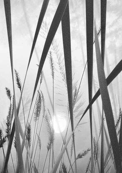 Wall Art - Photograph - Through The Looking Grass by John Poon