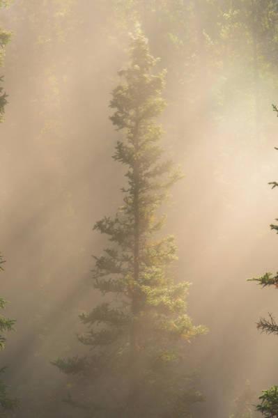Photograph - Through The Mist by Dustin  LeFevre