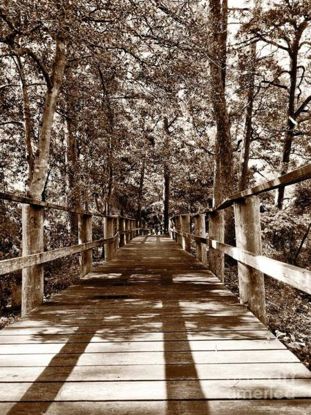 Photograph - Through The Narrow Path  by S Forte Designs