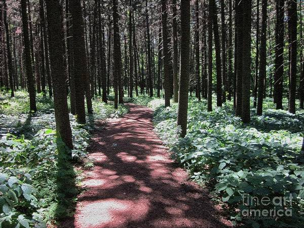Photograph - Through The Pines by Kathie Chicoine