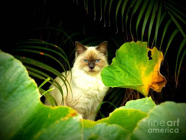 Evie Photograph - Through The Pumpkin Patch by Evie Hanlon