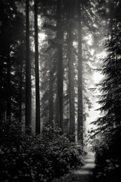 Wall Art - Photograph - Through The Redwoods - Black And White by Eduard Moldoveanu