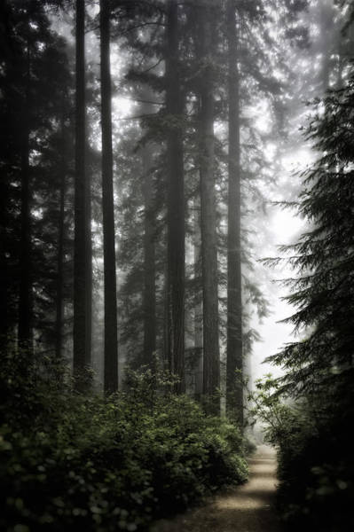 Wall Art - Photograph - Through The Redwoods by Eduard Moldoveanu