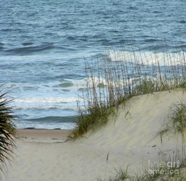 Photograph - Through The Sand Dunes by D Hackett
