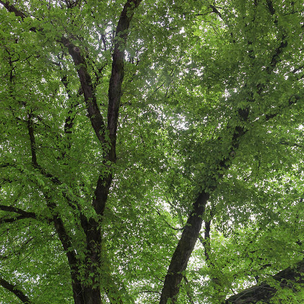 Photograph - Through The Trees by Cliff Wassmann