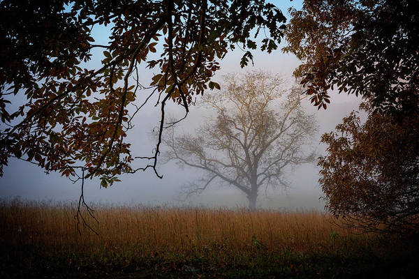 Wall Art - Photograph - Through The Trees In The Mist by Rick Berk