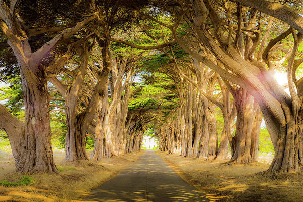 Pt. Reyes Photograph - Through The Trees by Peter Irwindale