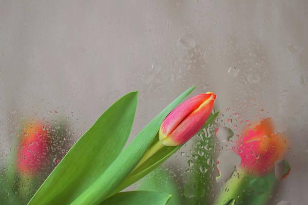 The Harbinger Photograph - Through The Tulips. by Svetlana Iso