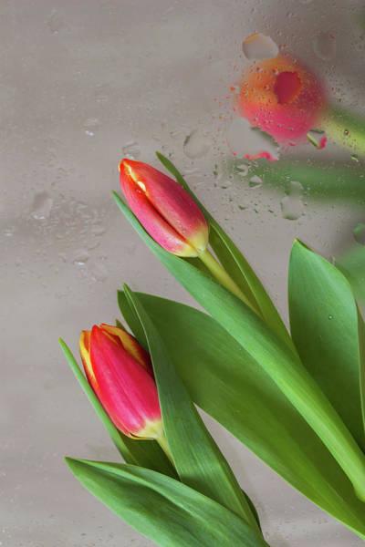The Harbinger Photograph - Through The Tulips. Vertical by Svetlana Iso