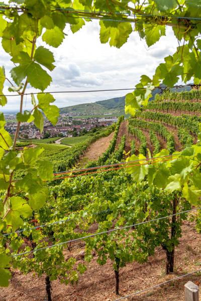 Wall Art - Photograph - Through The Vineyards Of Turckheim by W Chris Fooshee