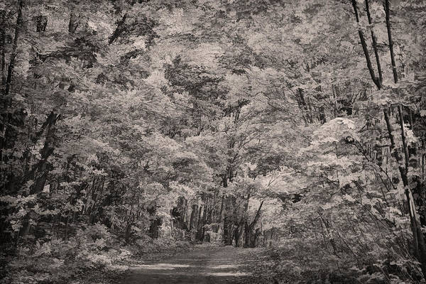 Photograph - Through The Woods Bw by Theo O'Connor