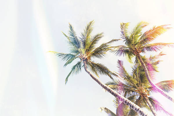 Coconut Trees Photograph - Throwback Thursday Summer by Fbmovercrafts