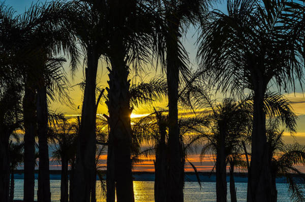 Photograph - Thru The Palms by Michael Thomas