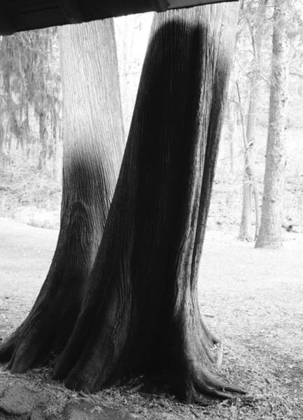 Photograph - Thrym's Poem by Char Szabo-Perricelli