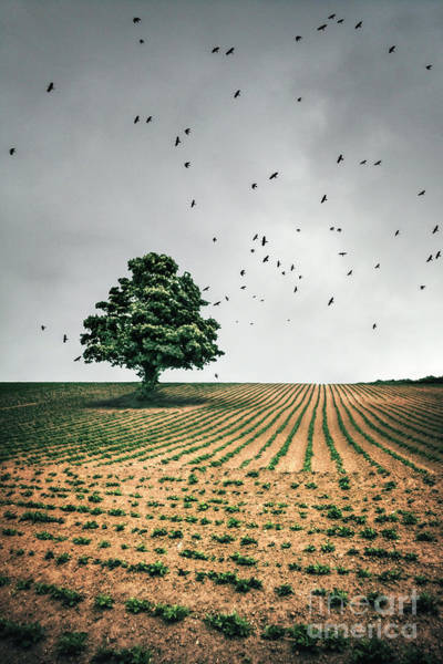 English Countryside Photograph - Thunder Arising by Evelina Kremsdorf