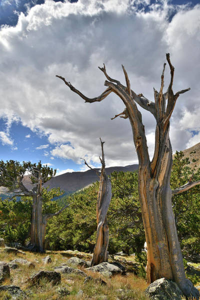 Photograph - Thunderhead Over Mt. Evans by Ray Mathis