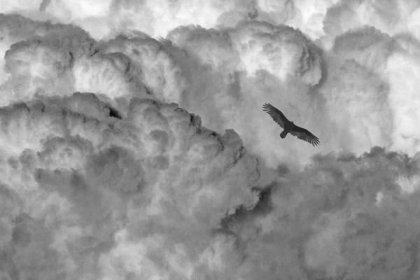 Photograph - Thunderhead by Wes Jimerson