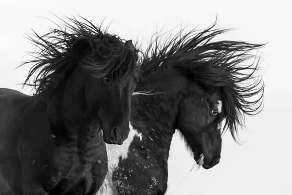 Painted Horses Photograph - Thunderheart by Sandy Sisti