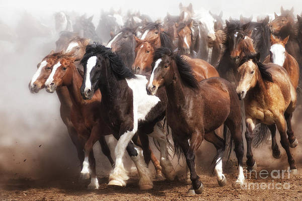 Herd Of Horses Wall Art - Photograph - Thundering Hooves by Heather Swan