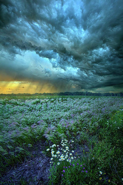 Photograph - Thy Will Be Done by Phil Koch