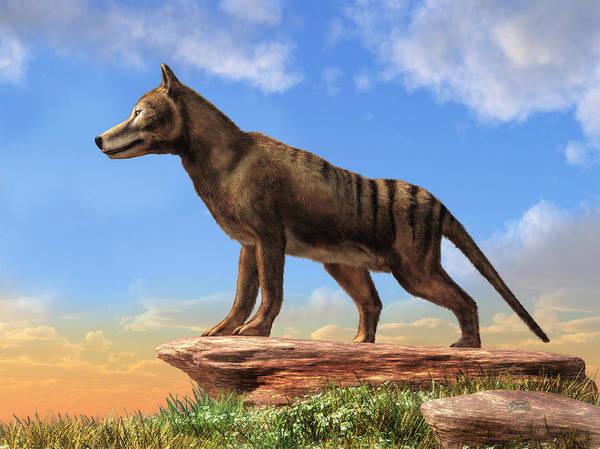 Wall Art - Digital Art - Thylacine by Daniel Eskridge