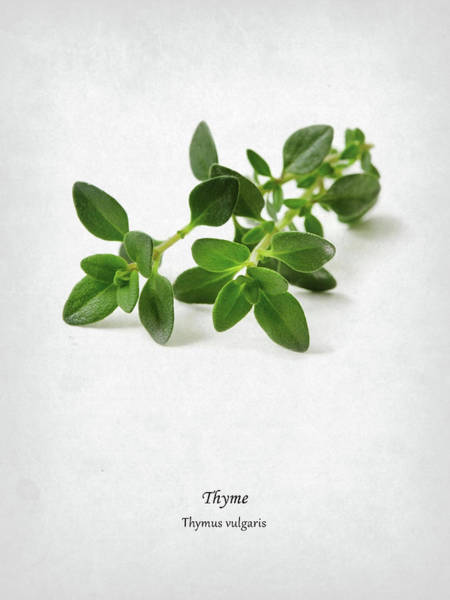 Wall Art - Photograph - Thyme by Mark Rogan