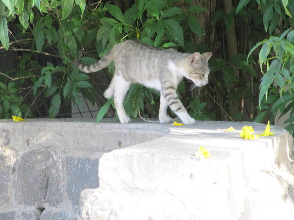 Photograph - Tiberius Israel Cat #2 by Donna L Munro