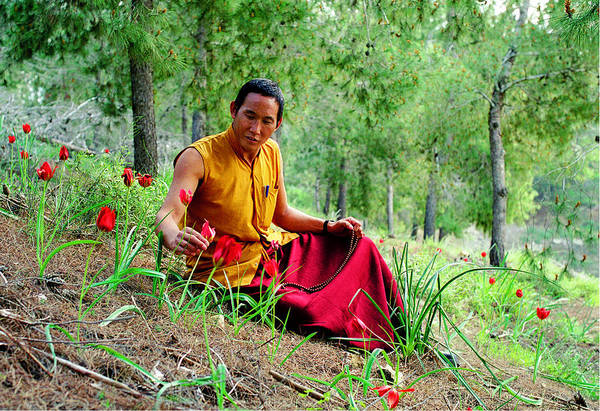 Photograph - Tibetan Doctor In Lahav Forest by Dubi Roman