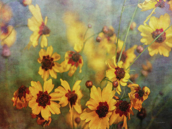 Photograph - Dreams Of Tickseed 2728 Idp_2 by Steven Ward