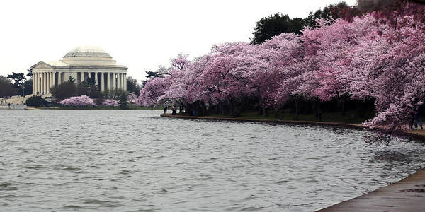 Wall Art - Photograph - Tidal Basin Spring by Mitch Cat