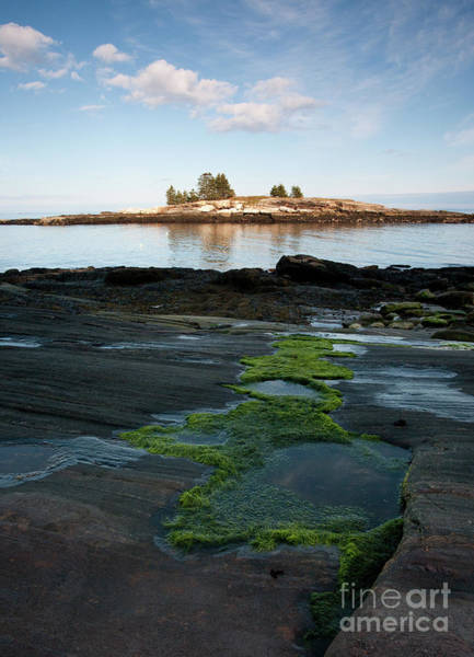 Photograph - Tidal Pools, Moss And Granite On Maine's Rocky Coast #8047 by John Bald