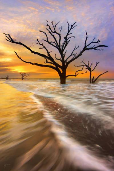 Bone Yard Wall Art - Photograph - Tidal Trees - Craigbill.com - Open Edition by Craig Bill