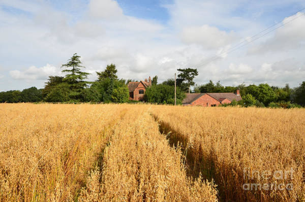 Wheat Photograph - Tiddington, Oxfordshire by Smart Aviation