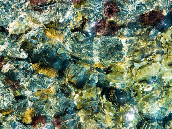 Impression Photograph - Tide Pool Abstraction by Christopher Johnson