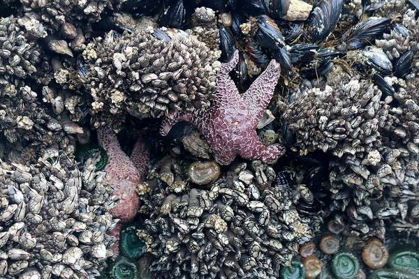 Photograph - Tide Pool Life - 2 by Christy Pooschke
