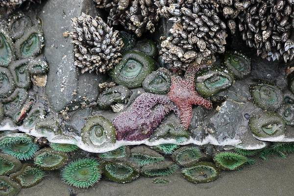 Photograph - Tide Pool Life  by Christy Pooschke