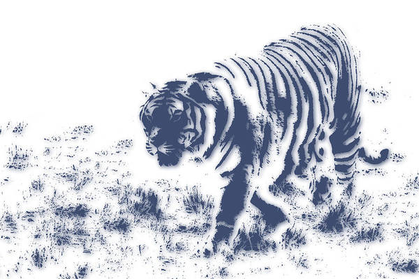 Wall Art - Photograph - Tiger 3 by Joe Hamilton