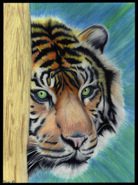 Wall Art - Drawing - Tiger by Alycia Ryan