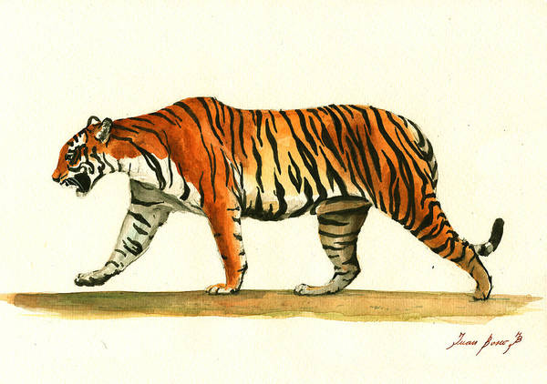 Wall Art - Painting - Tiger Animal  by Juan Bosco