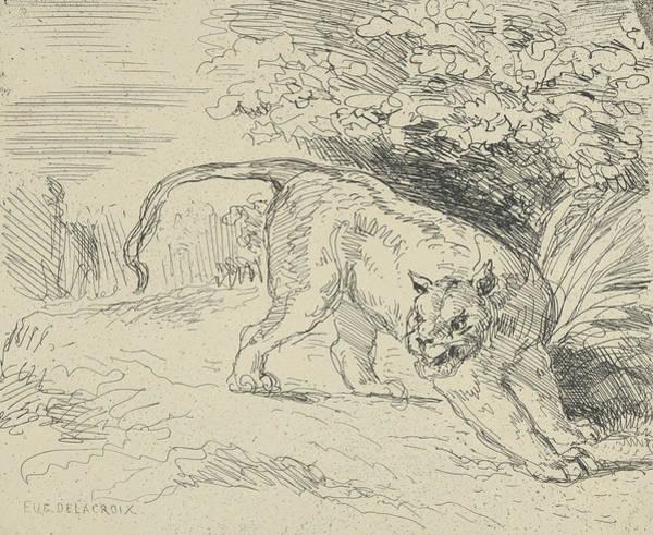 Drawing - Tiger At A Standstill by Eugene Delacroix