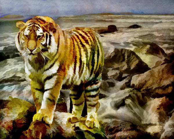 Photograph - Tiger At The Seashore by Ericamaxine Price