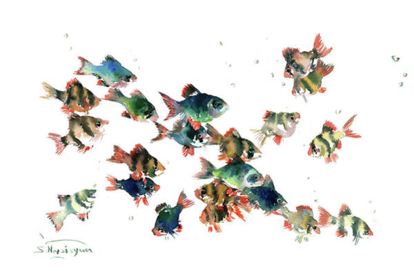 Wall Art - Painting - Tiger Barb Fish by Suren Nersisyan