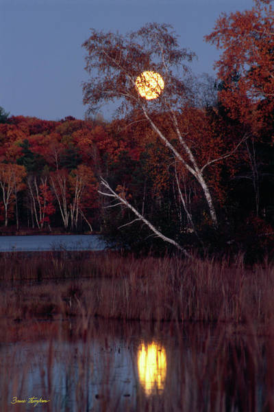 Photograph - Tiger Cat Moonrise by Bruce Thompson