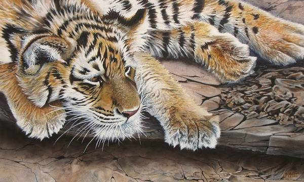 Painting - Tiger Cub by Greg and Linda Halom