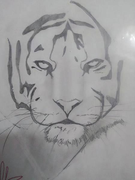 Sumatran Drawing - Tiger  by David Durbin